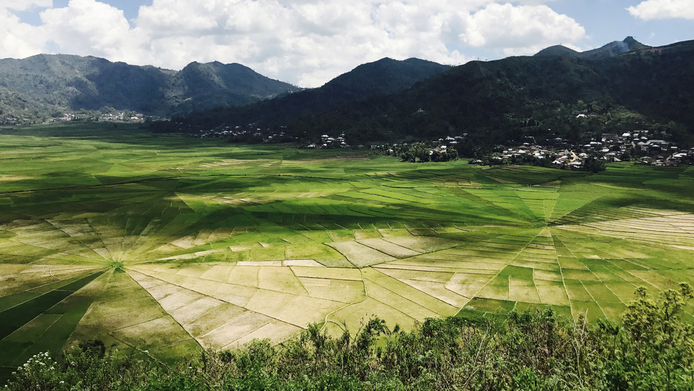 The famous spiderweb rice fields in Ruteng