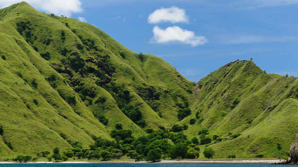The hills in Komodo Island is filled with green trees and plants