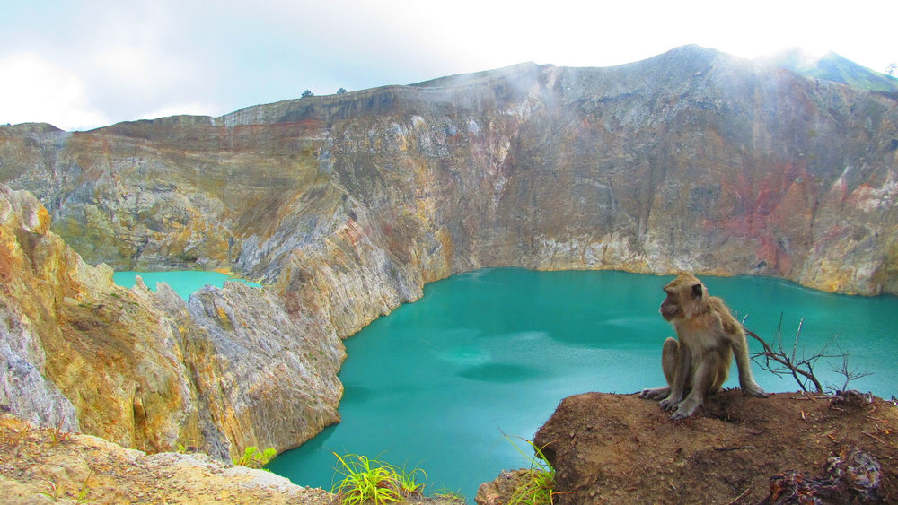A monkey is one of the wild animals that you can find in Kelimutu