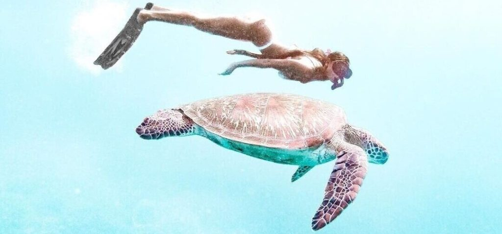 Snorkeling in the ocean with a giant turtle