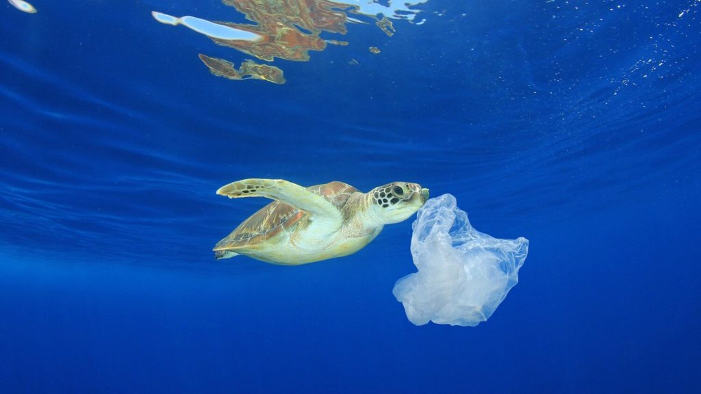 A baby turtle is eating a plastic waste in the sea