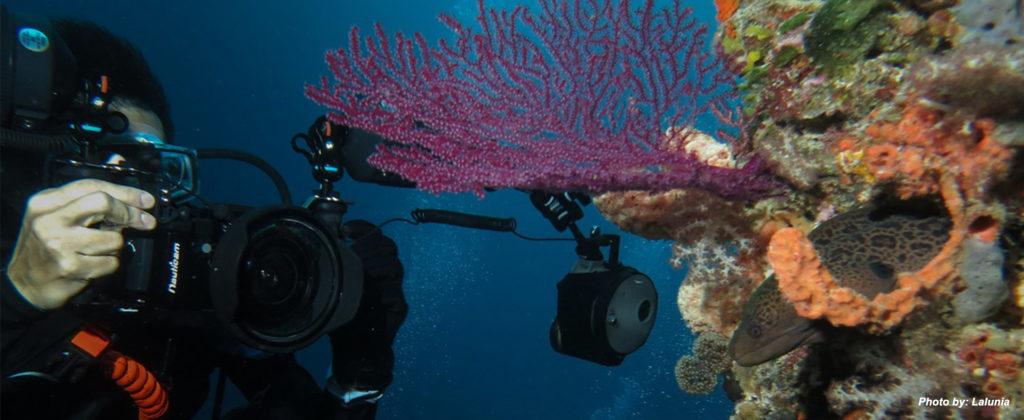 Macro dive sites Komodo Indonesia