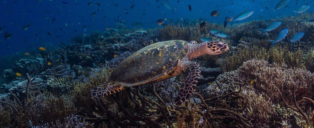 Diving in Crystal Rock Flores Komodo