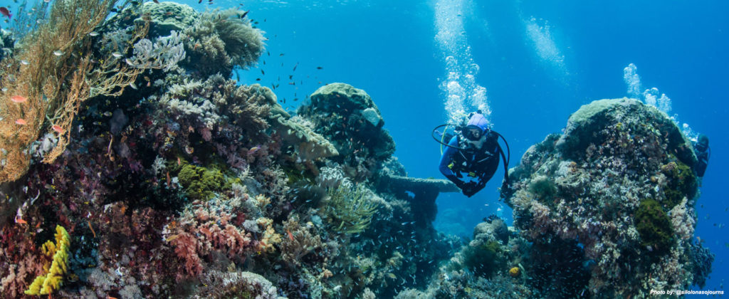 Komodo top dive sites